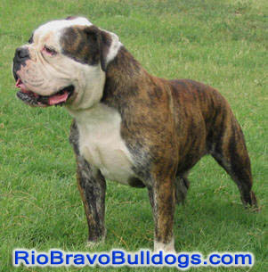 A product of a breeding using a Rio Bravo stud.